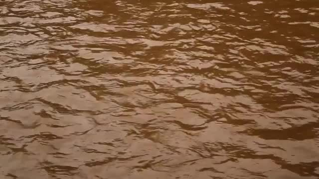 Close-up Shot Of Dirty River: Stock Video