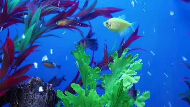 Colorful Fish In The Aquarium: Stock Video