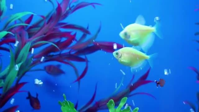 Fish On Blue Aquarium Background: Stock Video