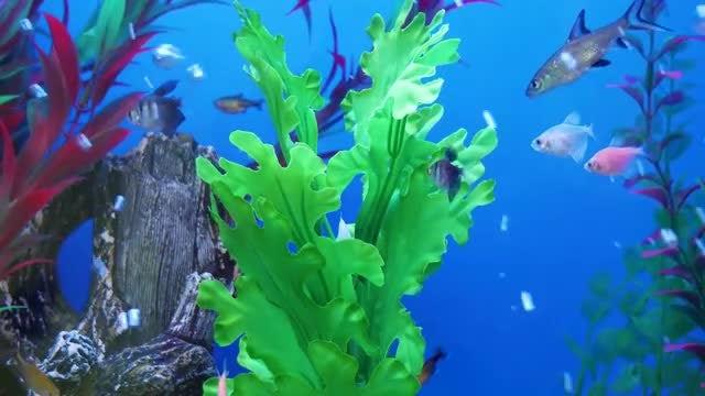 Fish Swimming In The Aquarium: Stock Video