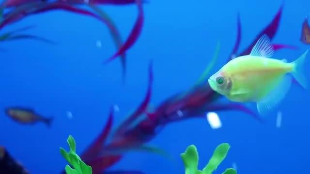 Fish Closeup In Aquarium Pack: Stock Video