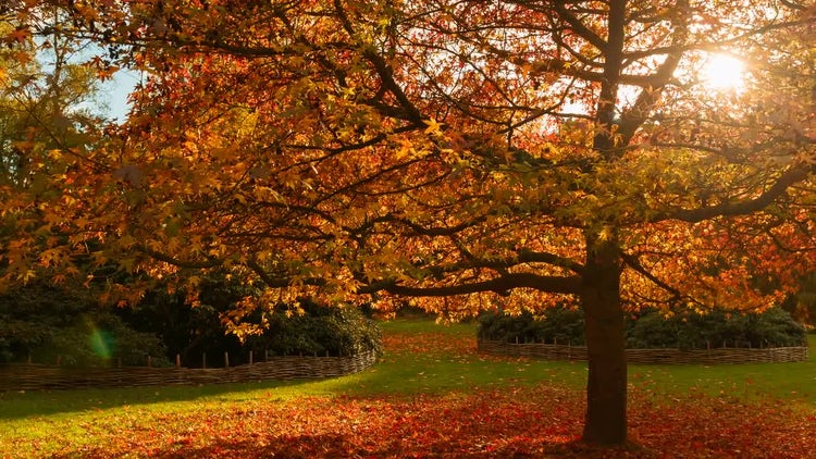 Beautiful Botanical Park In Autumn: Stock Video