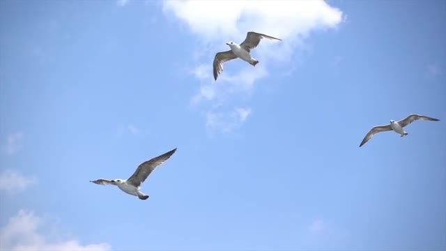 Seagulls Flying In Slow Motion: Stock Video