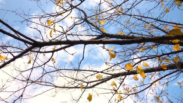 Pretty Branches During Autumn: Stock Video