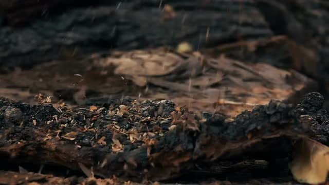 Sawdust Falling On Wood: Stock Video