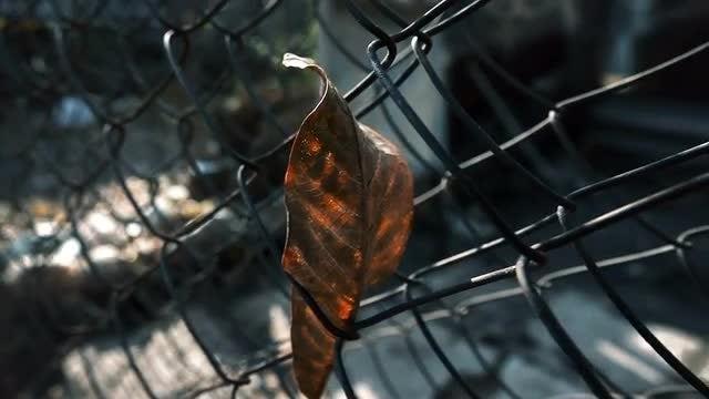 Dry Leaf Stuck On Fence: Stock Video