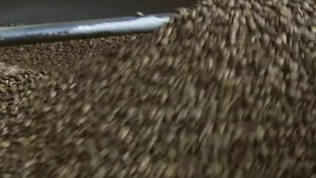 Coffee Beans Being Roasted: Stock Video