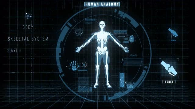 Futuristic Interface of Anatomy Systems: Stock Motion Graphics