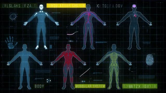 Medical HUD with Body Systems: Stock Motion Graphics