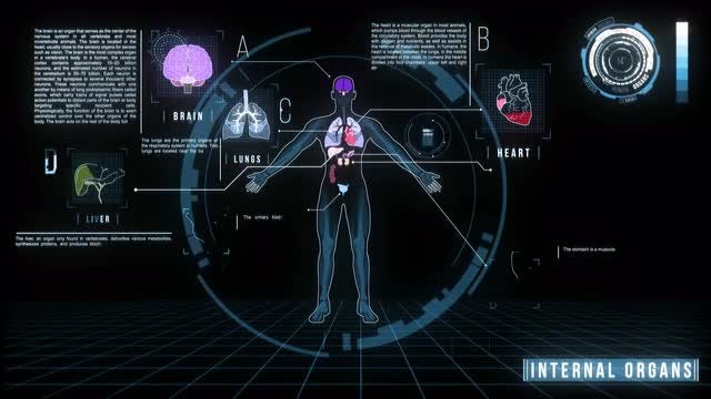 Human Internal Organs Screen: Stock Motion Graphics