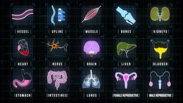 Human Internal Organs Icons Screen: Stock Motion Graphics