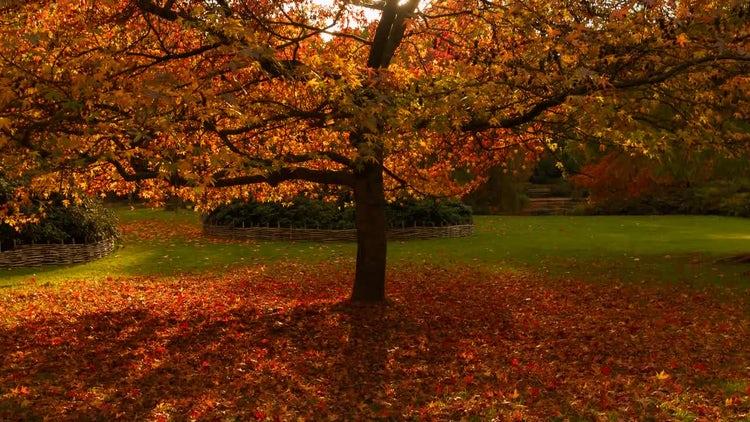Tilt Shot Of Oak Tree: Stock Video