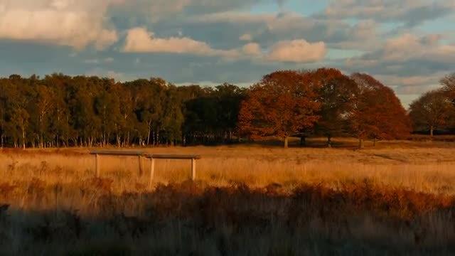 Pastoral Autumn Shot: Stock Video