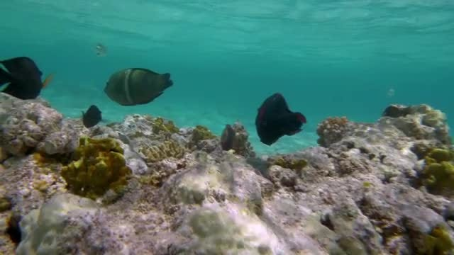 Coral Reef: Stock Video