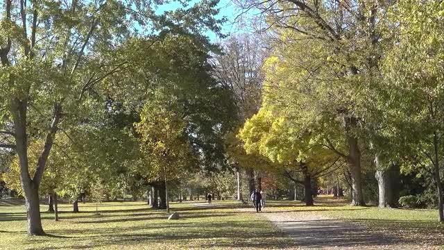 People Walking In Botanical Park: Stock Video
