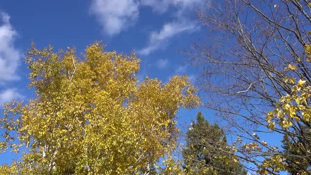 Autumn Trees Swaying In Wind: Stock Video