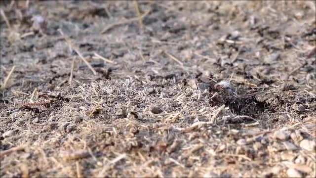 Ants Crawling On The Ground: Stock Video
