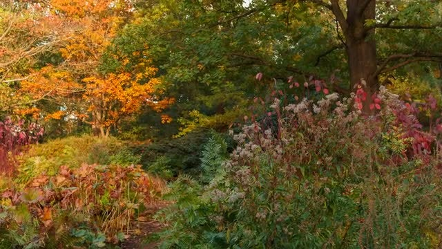 Beautiful Autumn Vegetation: Stock Video