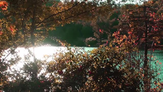 Autumn Plants By the Lake: Stock Video