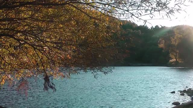 Tree Branches Over The Lake: Stock Video