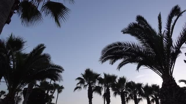 Silhouettes Of Palms Against Sky: Stock Video
