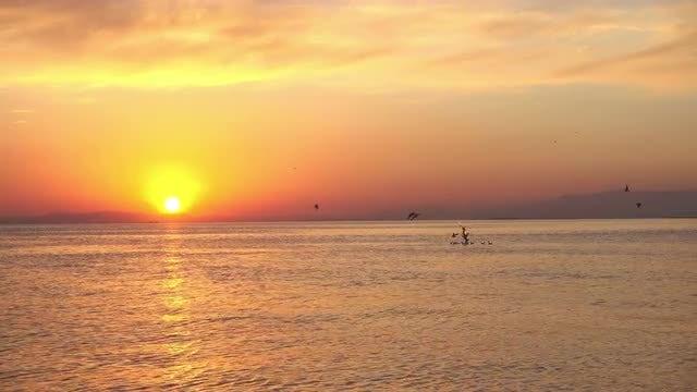 Seabirds Gather Around During Sunset: Stock Video