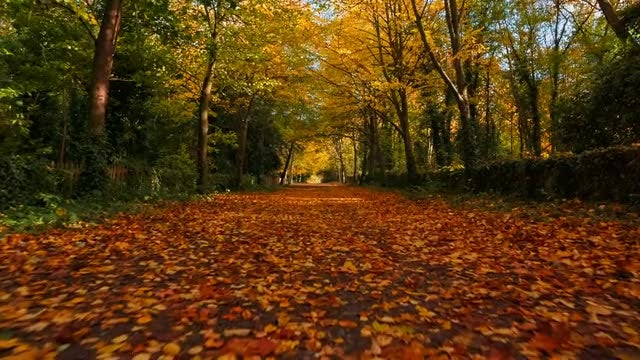 Walking On Autumn Forest: Stock Video