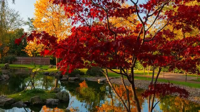 Autumn Shot Of Japanese Garden: Stock Video