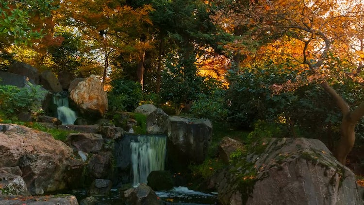 Japanese Garden With Waterfall: Stock Video