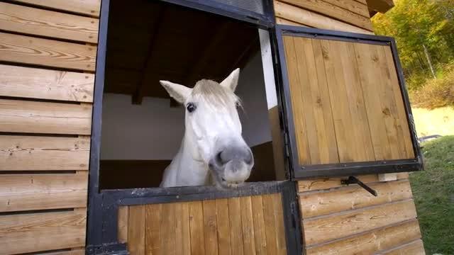 White Horse: Stock Video