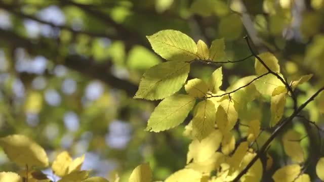 Close-up Shot Of Tree Branches: Stock Video