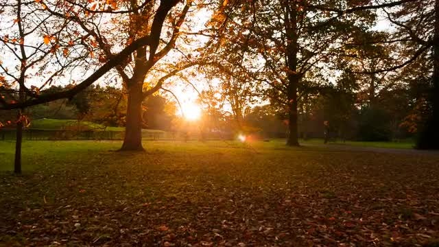 Bare Trees In An Autumn Forest: Stock Video