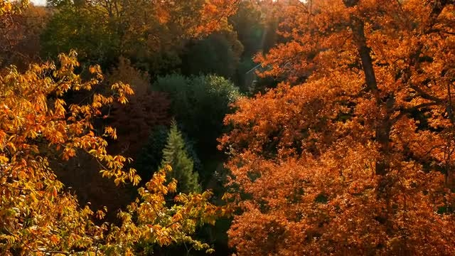 Autumn Forest At Sunset: Stock Video