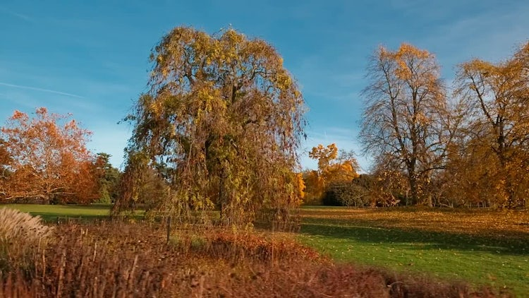Tracking Shot Of Autumn Forest: Stock Video