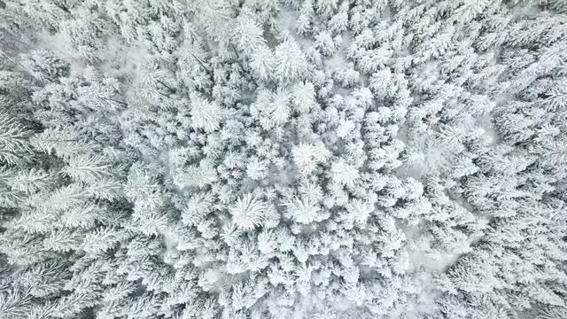Snowy Forest Aerial Top View: Stock Video