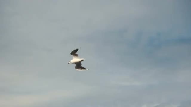 Low-angle Shot Of Seagul Flying: Stock Video