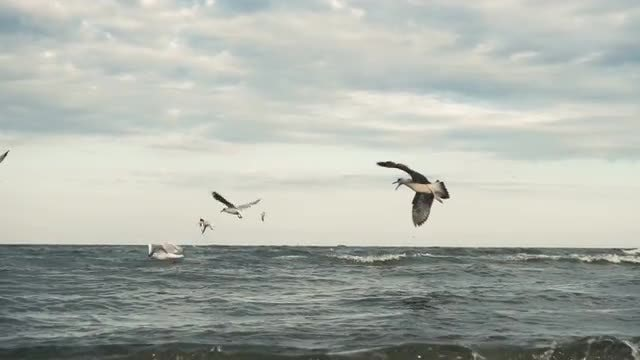 Seagulls Flying Low On Water: Stock Video