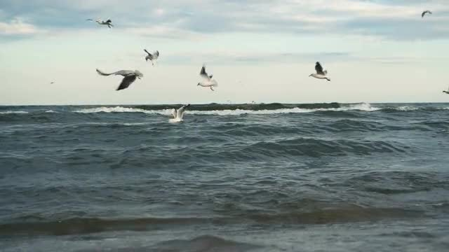 Seagulls Wait For Each Other: Stock Video