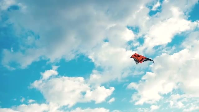 Flying Red Kite: Stock Video
