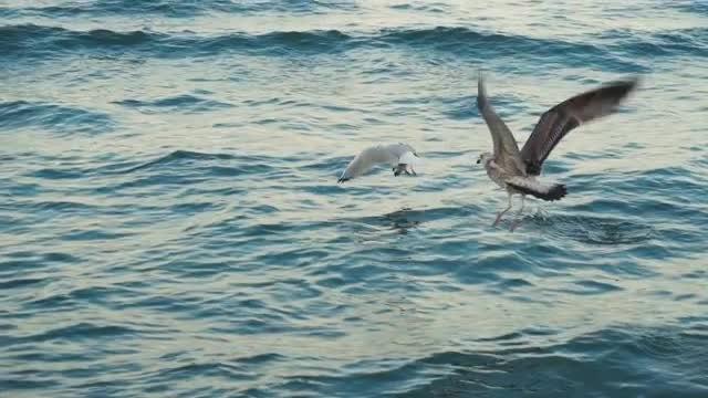 Seagulls On The Seacoast: Stock Video