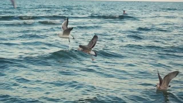 Seagulls Flying Over The Ocean: Stock Video