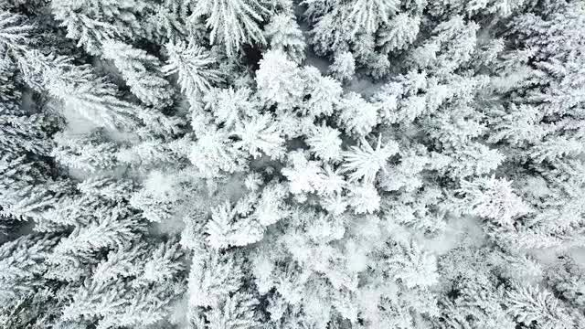 Winter Aerial View: Stock Video
