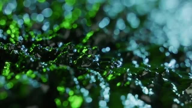 Seaweed: Stock Video