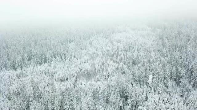 Snowy Forest Aerial: Stock Video