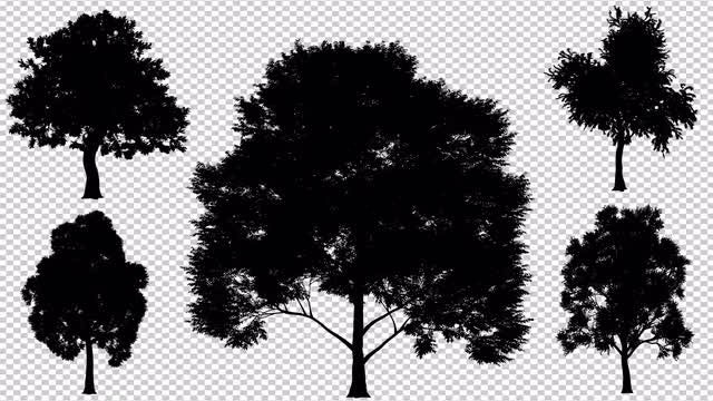 Silhouette Of Growing Deciduous Trees: Stock Motion Graphics
