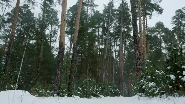 POV Of Forest During Winter: Stock Video