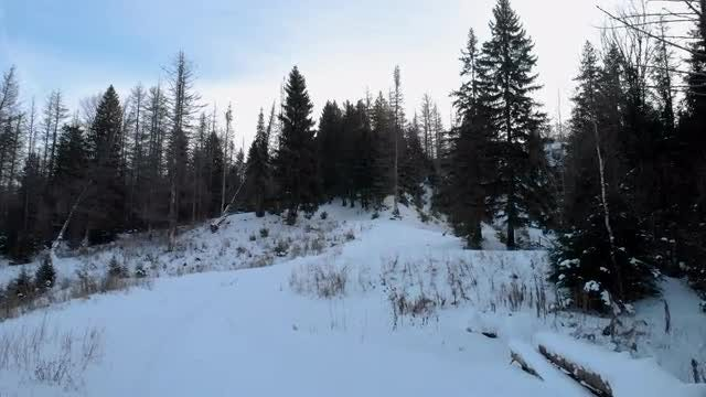 POV Of Snow-covered Forest: Stock Video