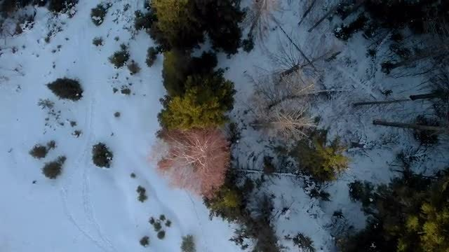 Overhead Shot Of Snow-covered Forest: Stock Video