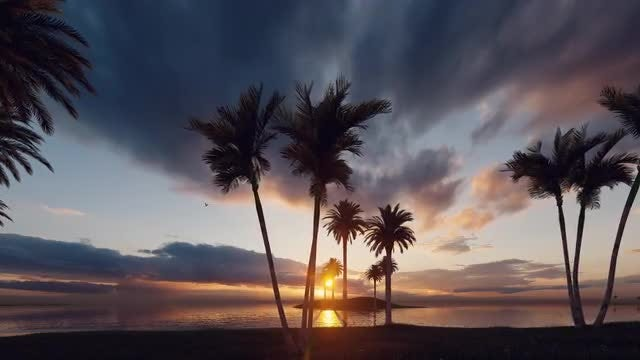 Sunset On The Palms Beach: Stock Motion Graphics