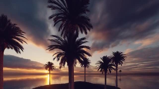 Sunset On Palms Island: Stock Motion Graphics